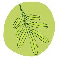 Leaf icon 3