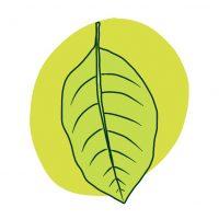 leaf icon 1